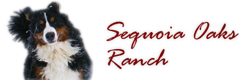 Logo Sequoia Oaks Bernese Mountain Dogs Bernese Dog Puppy Breeder in California puppies